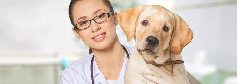 Ветеринарные школы Словакии